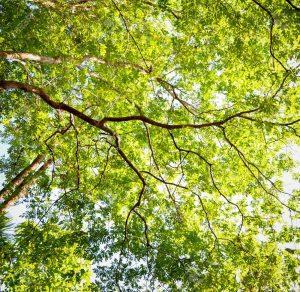 Read more about the article Columna N° 2 En Contacto con la Conservación: Ya no son sólo árboles