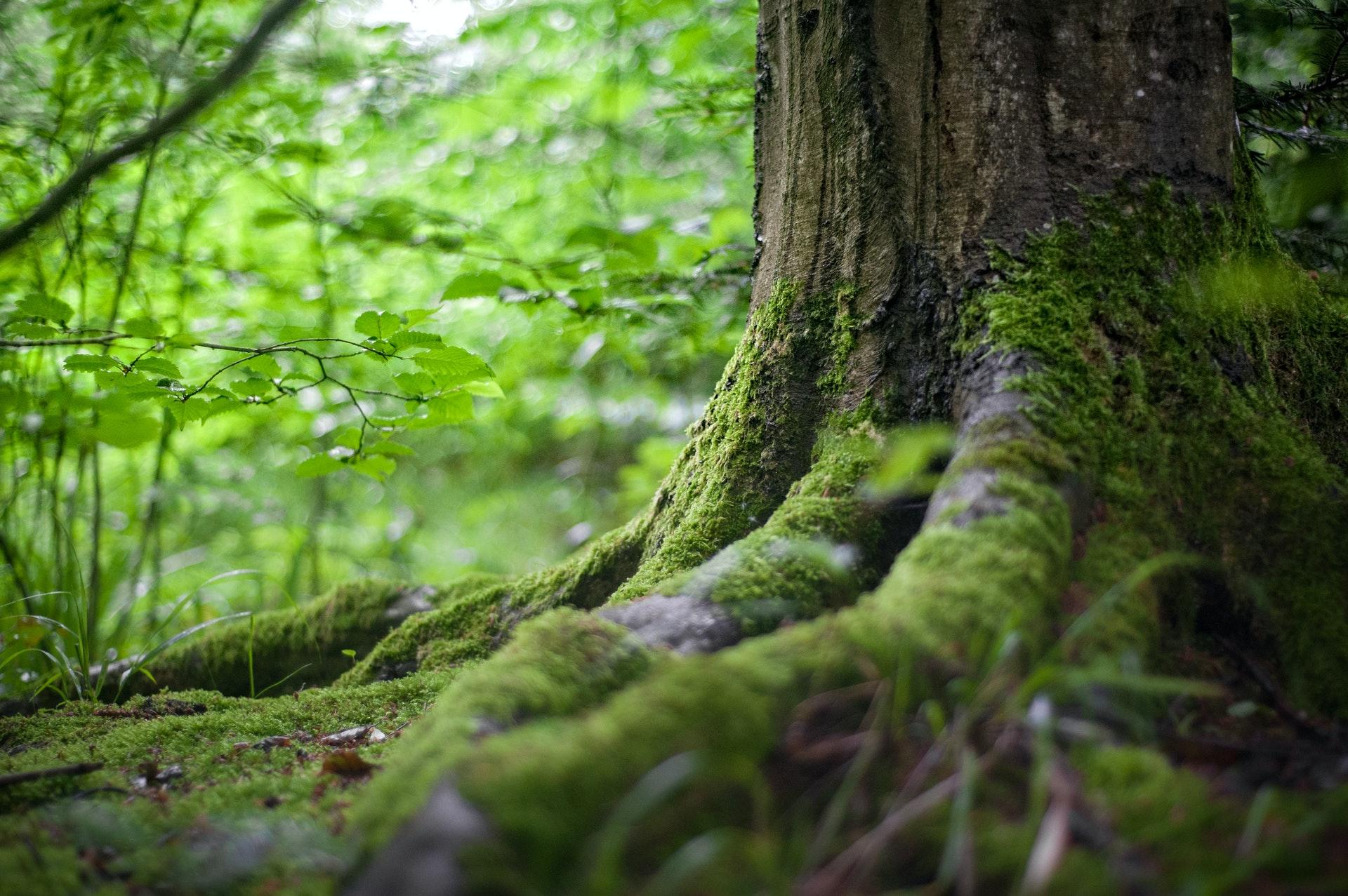 Proteger la naturaleza garantiza la vida