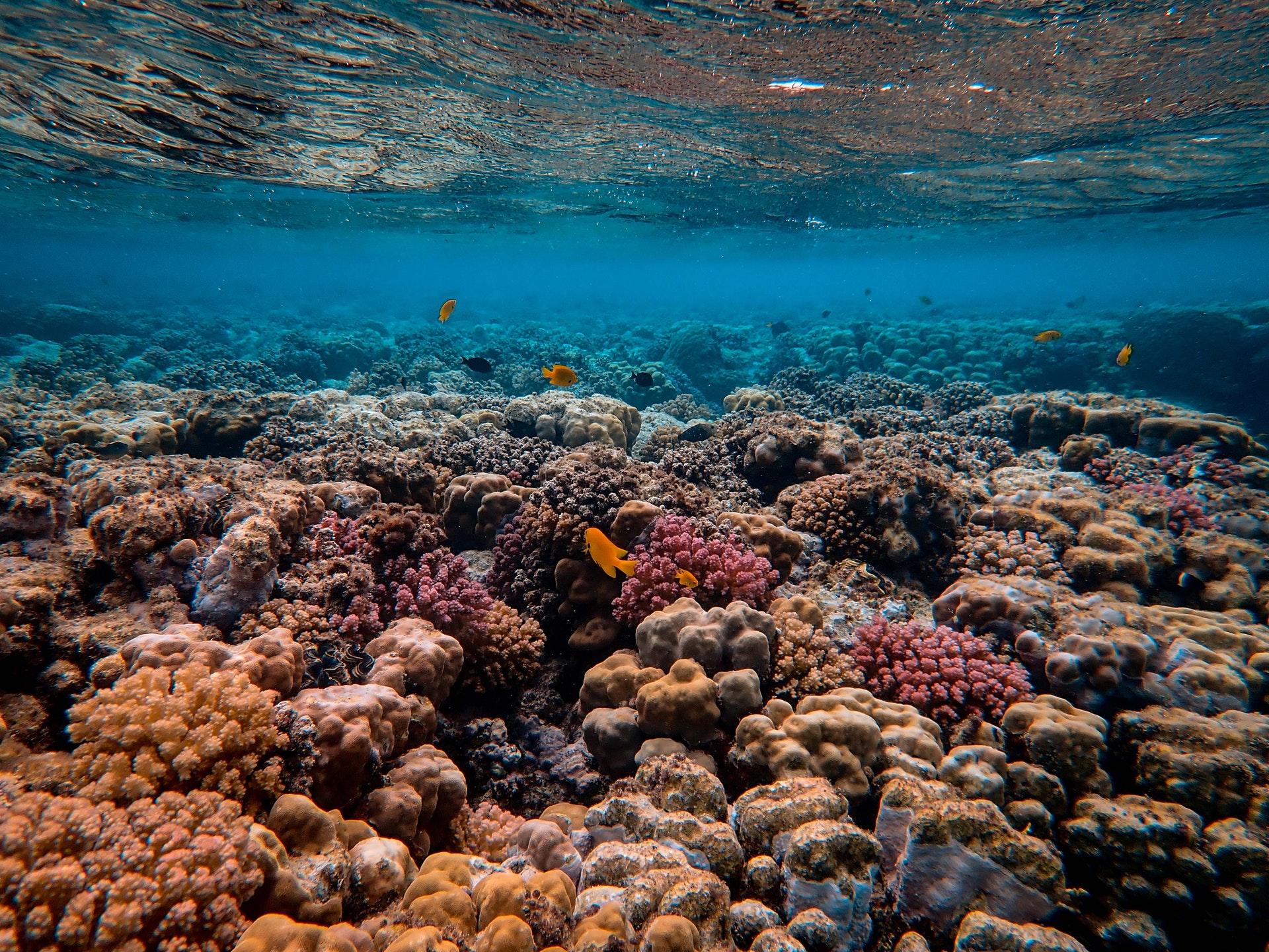 Manifiesto subacuático para un mundo en armonía