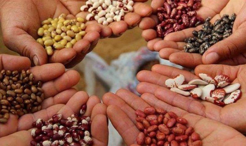 Semana de las Semillas Nativas y Criollas