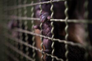 Traficados y Torturados
