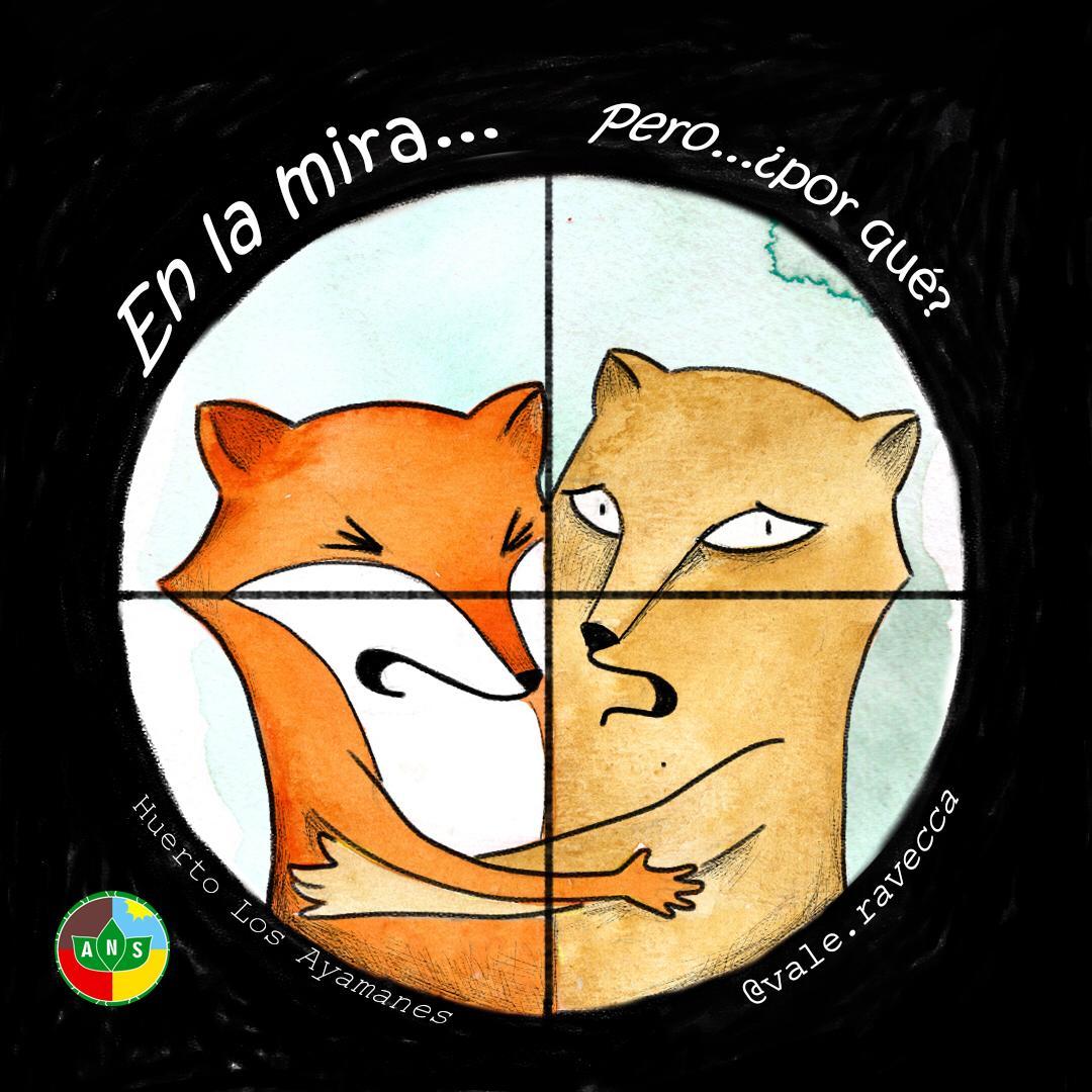 Lee más sobre el artículo Sobre la situación del Zorro Colorado y el Puma
