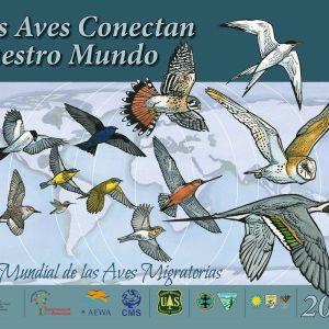 Día Mundial de las Aves Migratorias: Volemos junto a ellas