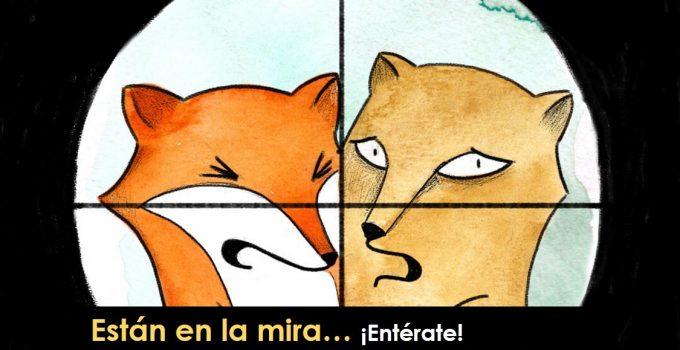 Puma y zorro colorado ilustración